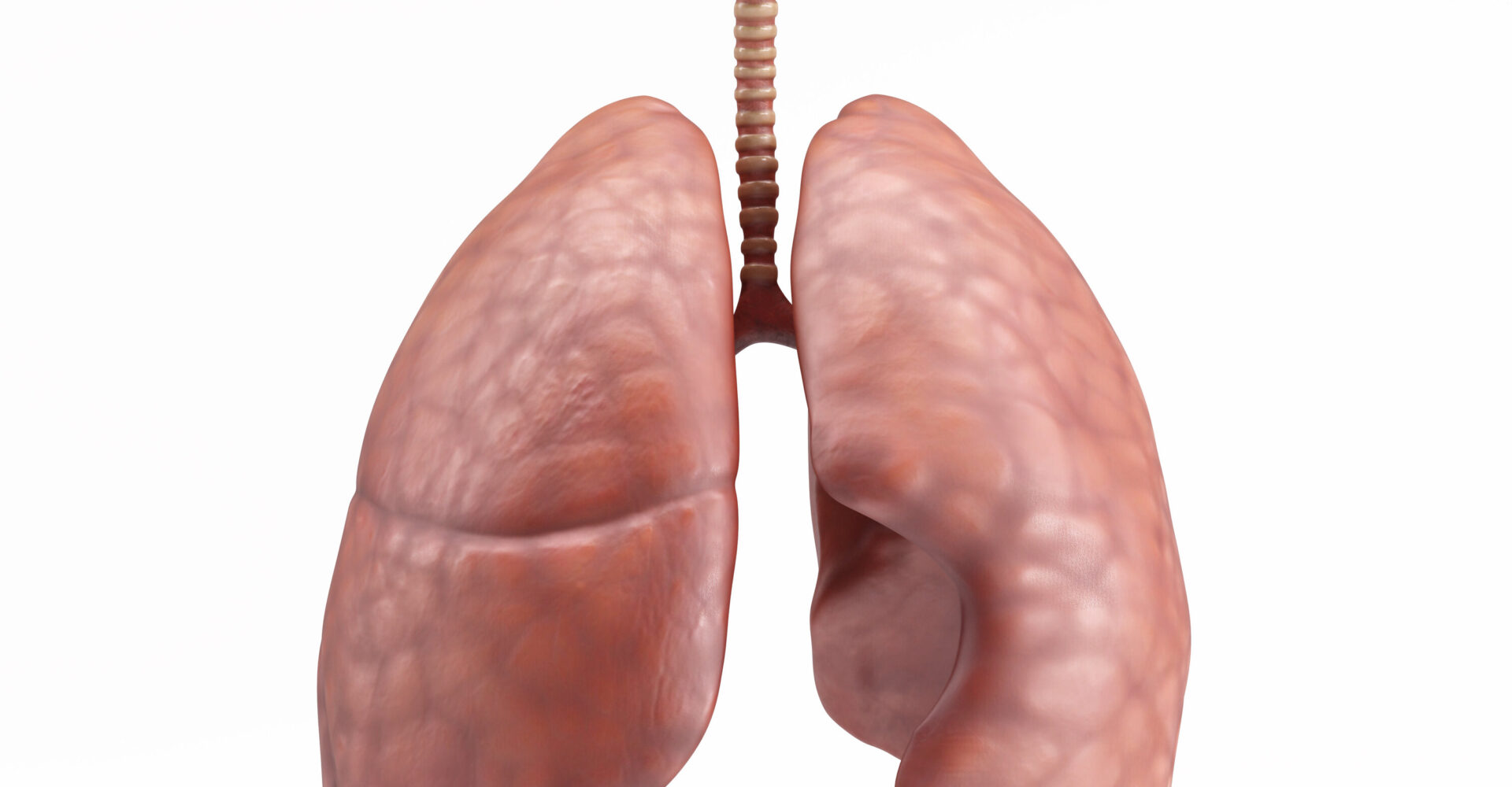 There are two main types of lung cancer