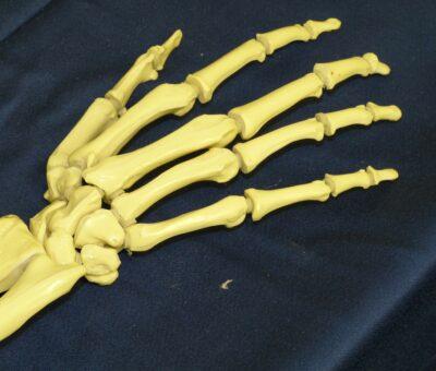Finger bone
