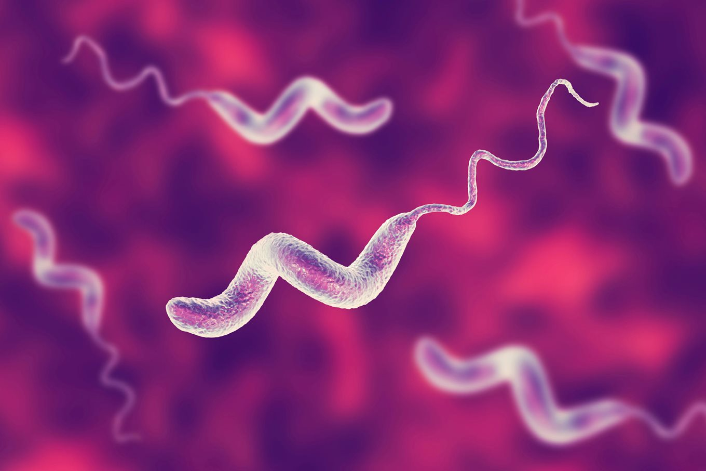 Campylobacter infection